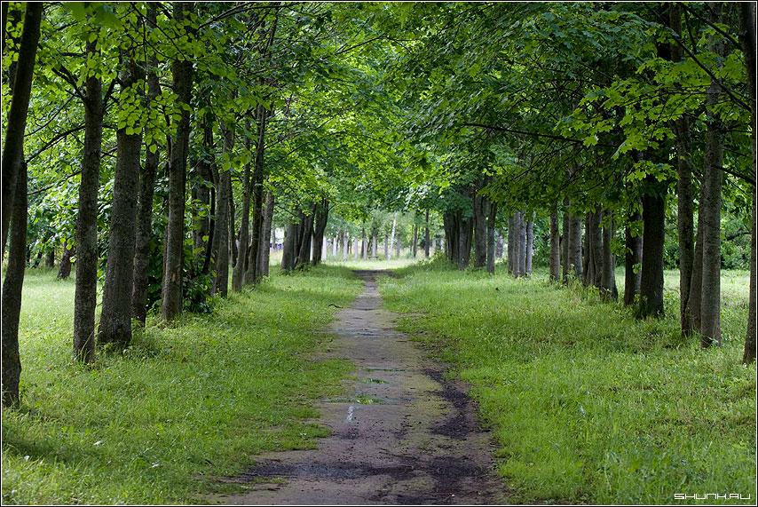 Дорожка в парке - зелень лето деревья фото фотосайт