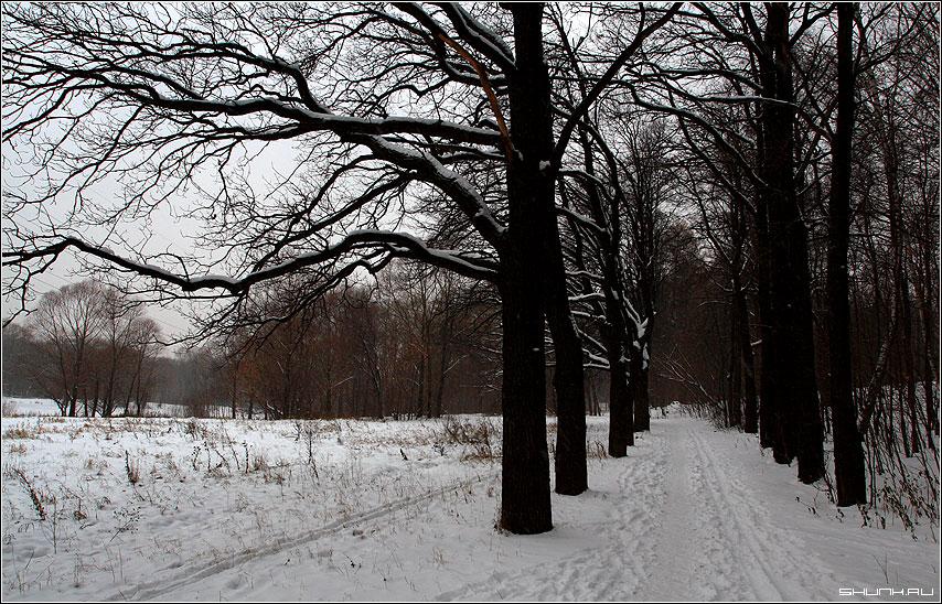 В летнем парке зима, в летнем парке концерт... - зима деревья тропинка фото фотосайт