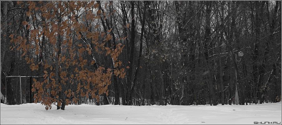 Тоска по осени - времена года зима желтые листья снег парк фото фотосайт