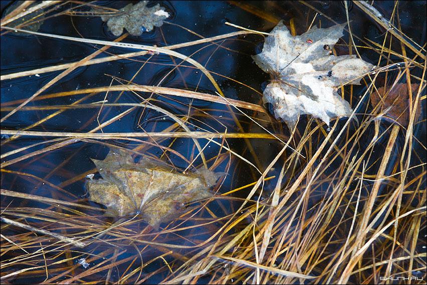 Снова осень - времена года осень лужа листва трава фото фотосайт