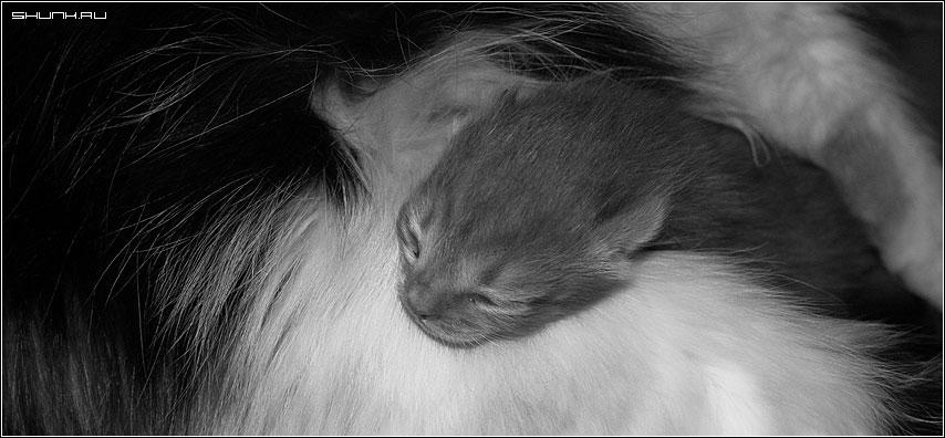 Новорожденный - котонео чб чернобелое фото фотосайт