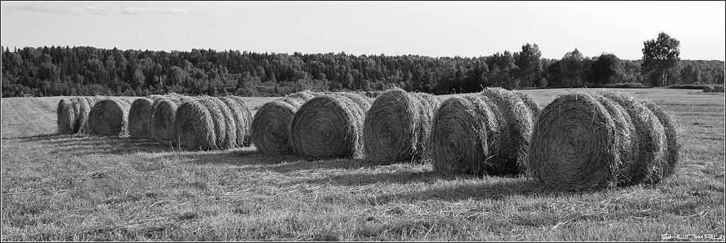 Нивы сжаты, рощи голы... - лето чб лес поле хлеба фото фотосайт
