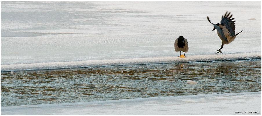 На проталине - вороны хлеб проталина лед река зима фото фотосайт