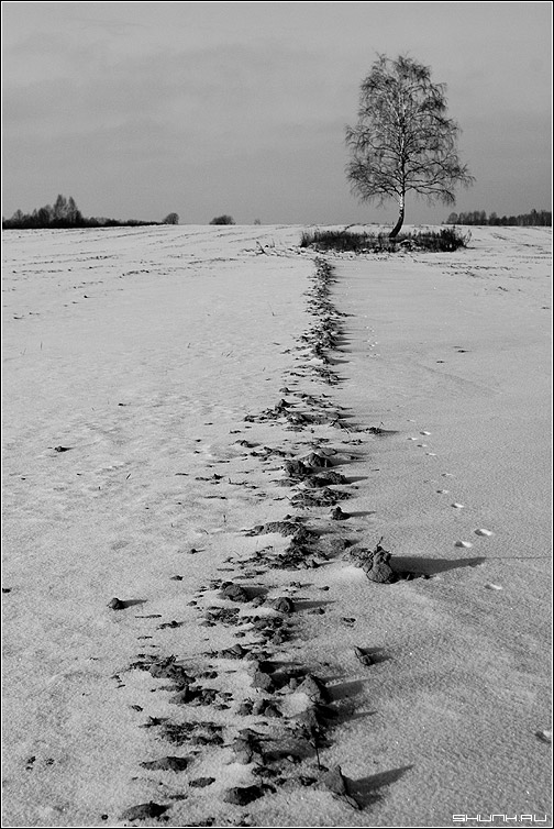 Январь. - зима снег борозда береза чб чернобелое фото фотосайт
