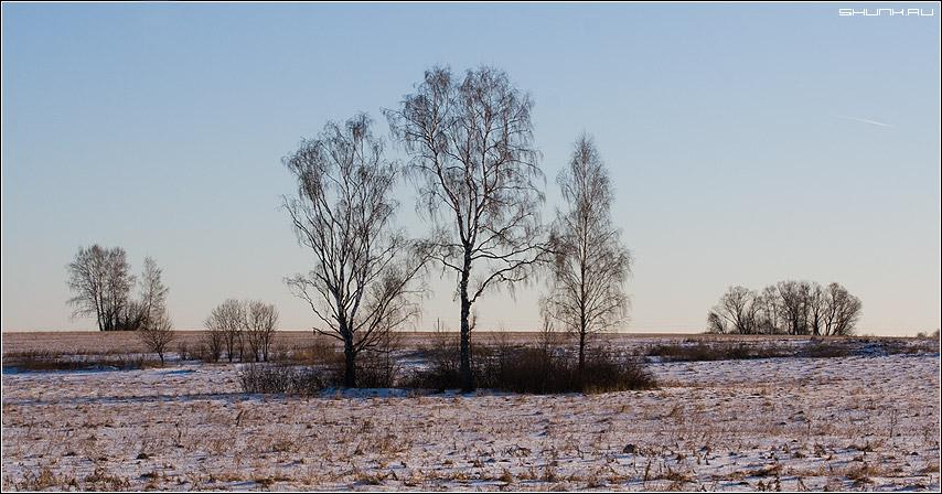 Подружки - береза поле деревня зима три фото фотосайт