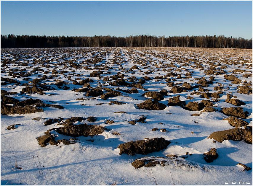 Такое фиговое лето - зима снег поле январь паханное фото фотосайт