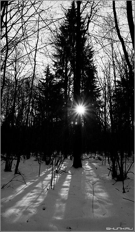 Луч света в темном царстве - зима лес солнце черно-белое фото фотосайт