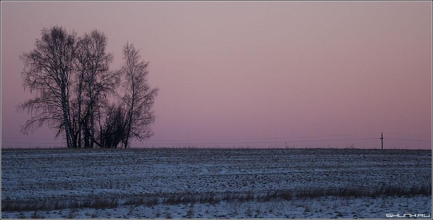 Закат - небо береза закат столю поле деревня фото фотосайт
