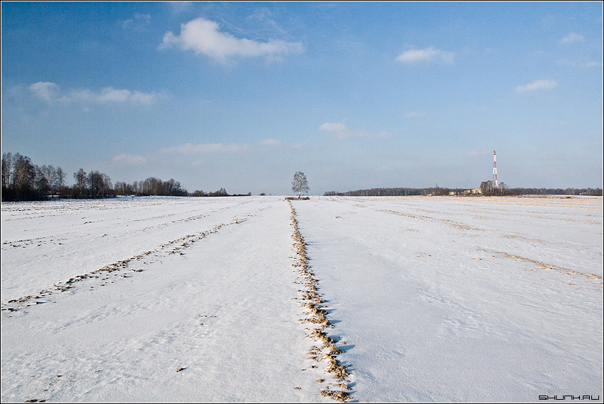 Далекая березка - поле борозда снег береза небо деревня фото фотосайт