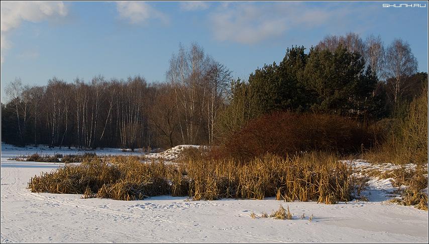 Цветастый день - зима лес серебрянный бор река лед фото фотосайт