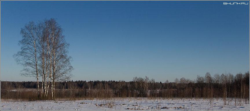 Деревенские просторы - лес поле береза небо зима деревня фото фотосайт