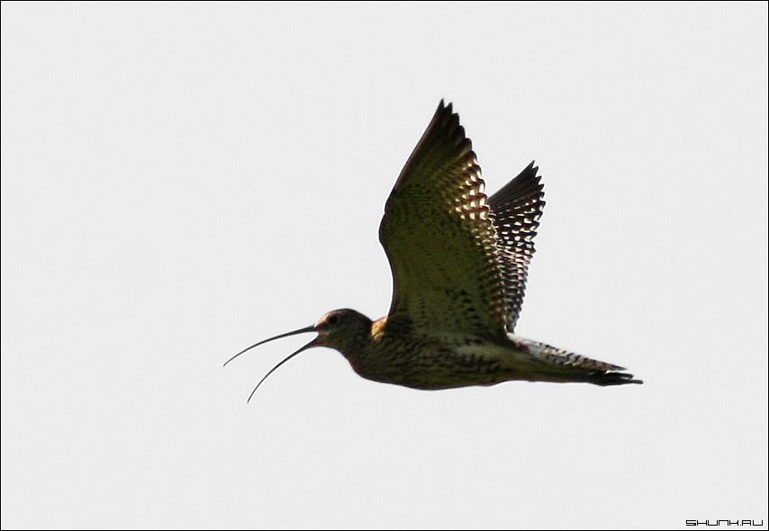 Что за птиц? - птица небо клюв фото фотосайт