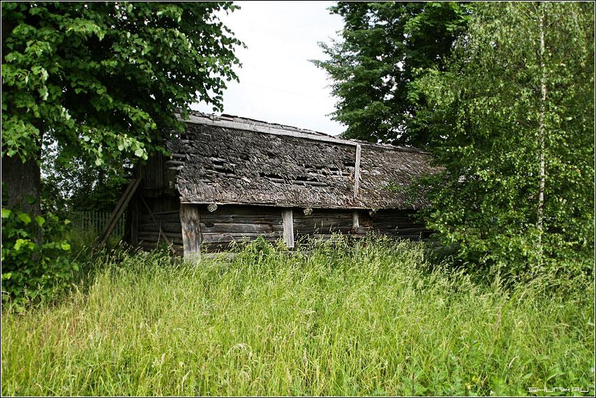 Теремок - он не низок не высок - сарай зелень лето дранка рубцово деревня моя фото фотосайт