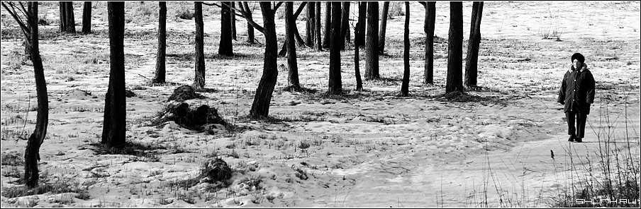 Прогулка - бабушка пожилой человек лес деревья зима снег прогулка черно-белое фото фотосайт