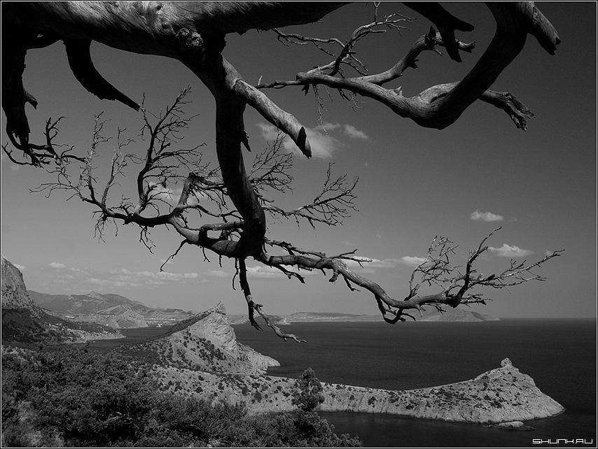 Вид на мыс - черно-белое море крым ветки гора горы фото фотосайт