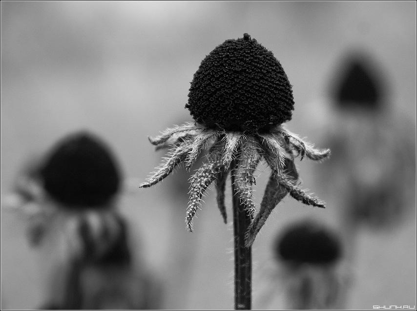 На день рождения - цветы черно-белое графика фото фотосайт