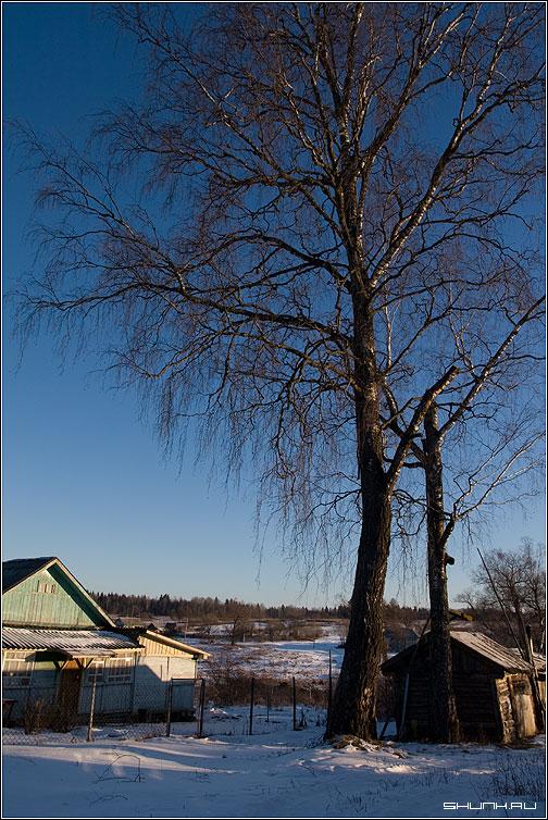 Под березой (Ильинское) - ильинское деревня зима снег небо фото фотосайт