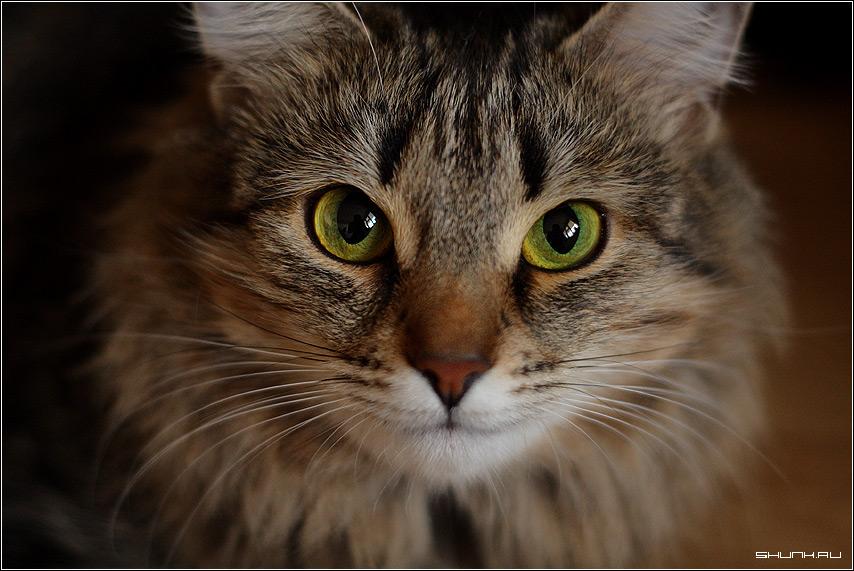 Автопортрет в глазах кота - кот глаза усы портрет отражение фото фотосайт
