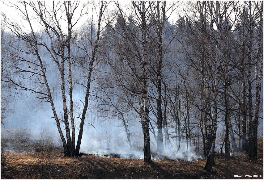 Весна с дымком - весна трава огонь дым фото фотосайт