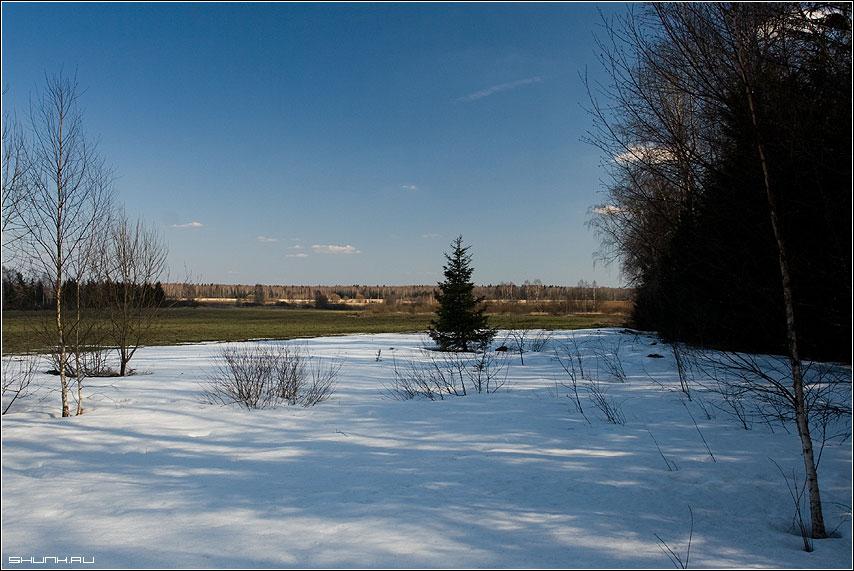 Из зимы в лето - трава снег лес тень весна елка поле фото фотосайт