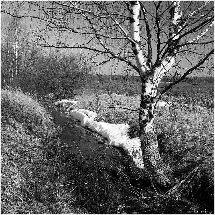 Последний кусочек зимы - черно-белое снег береза овраг ручей квадрат фото фотосайт