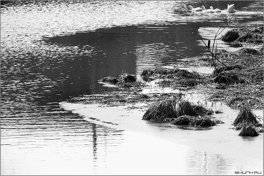 Тылые воды - река руть крюково берег утки фото фотосайт