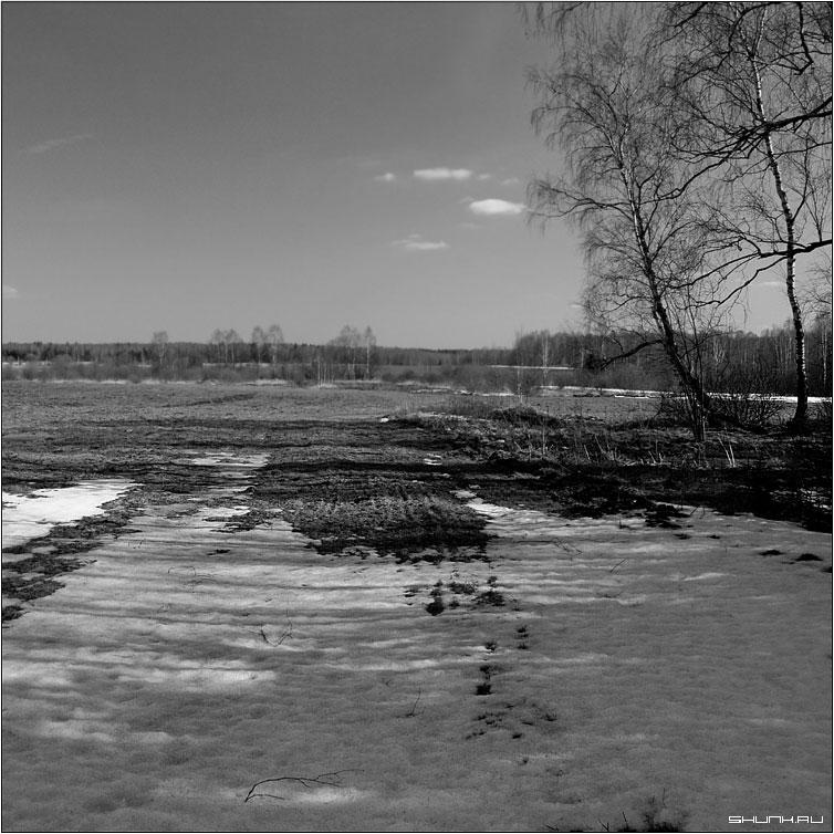 Весна на опушке леса - весна поле лес снег береза небо квадрат черно-белое фото фотосайт