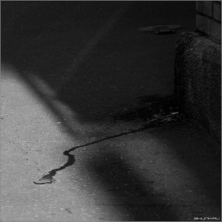 Про ручей - угол собака ручей чб квадрат фото фотосайт