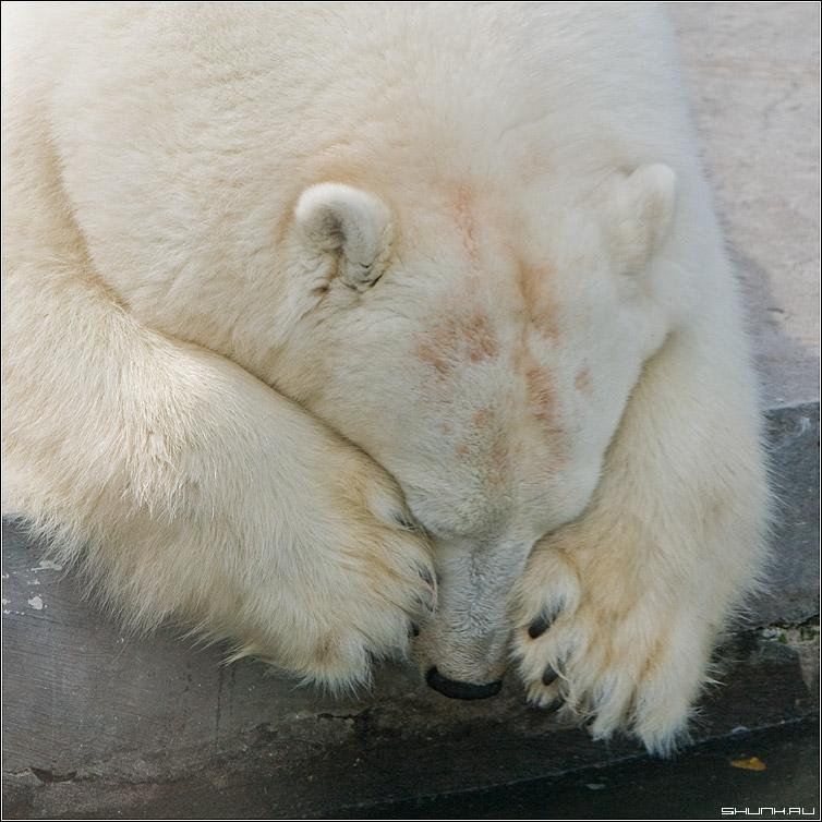 Утро - медведь зоопарк лапы край фото фотосайт