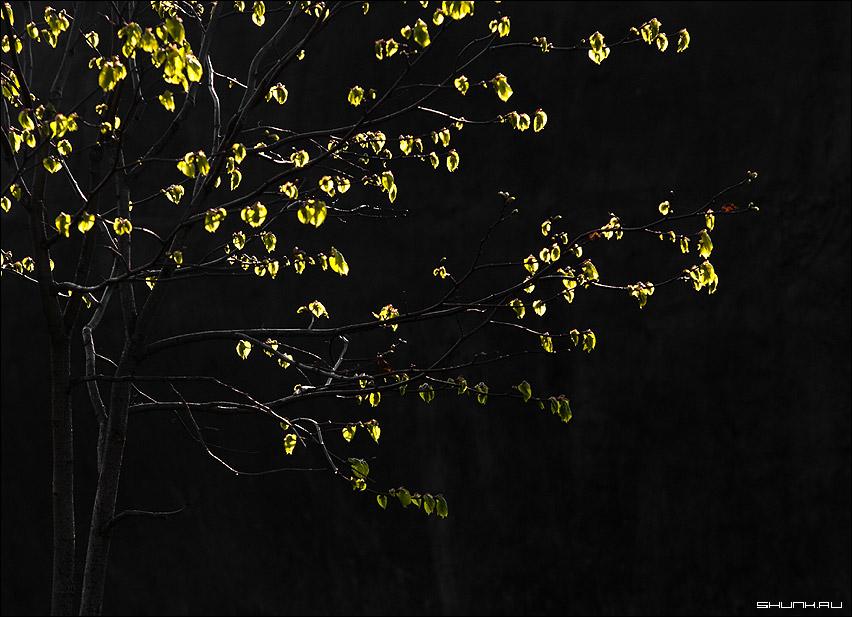 Тусклая весна - листья дерево свет фон весна фото фотосайт