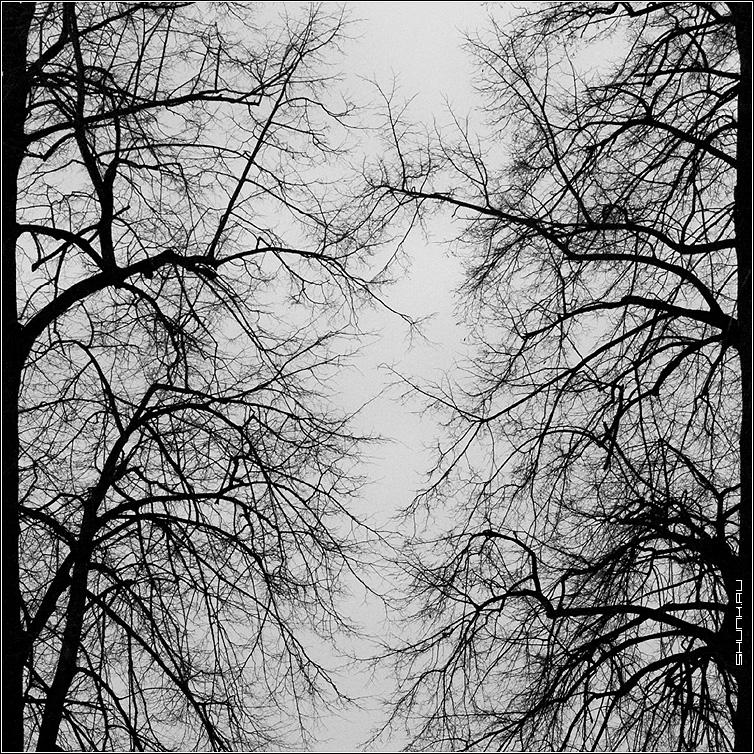 Вены - деревья ветви небо квадрат чб черно-белое фото фотосайт
