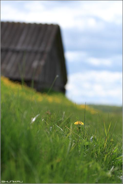 Про погреб и одуванчик - история весна деревня крюково небо погреб одуванчик фото фотосайт