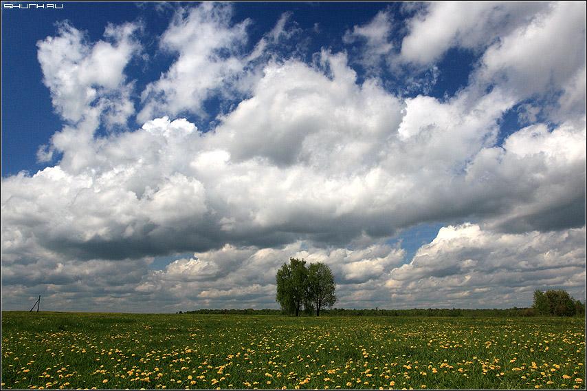 На одуванчиковом поле - небо поле деревья пара облака деревня фото фотосайт