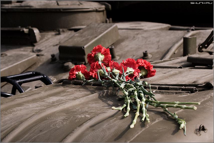 День победы - цветы танк день победа 9 май фото фотосайт