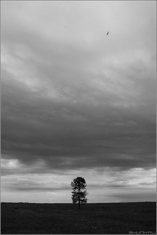Дуб - дерево поле небо черно-белое фото фотосайт