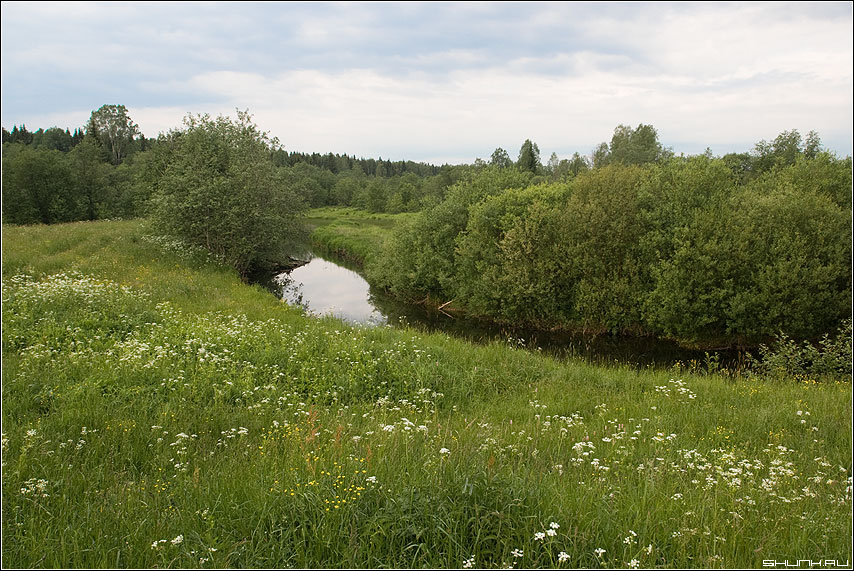 Речушка - деревня зелень лето речка таложня торжок окрестности фото фотосайт
