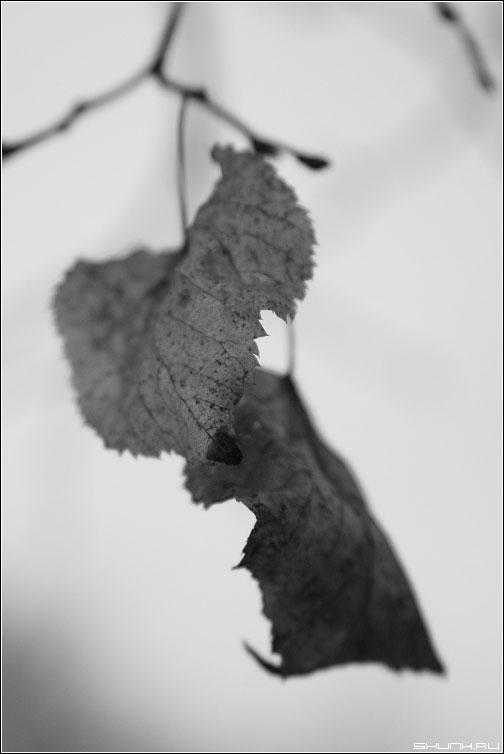 Осенняя грусть - грусть листья чернобелое осень листва фото фотосайт