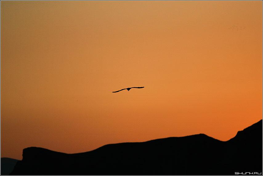 Оранжевое небо - чайка горы крым кара-даг ностальгия фото фотосайт