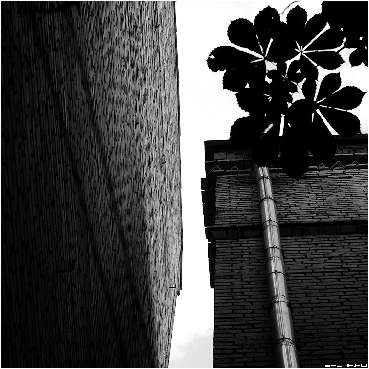 Каштановая тень - дома перспектива чернобелое квадрат архитектура каштан фото фотосайт