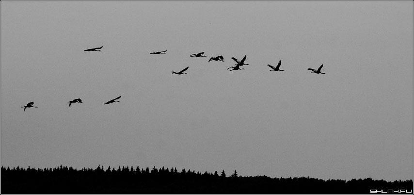 鹤群飞翔简笔图图片