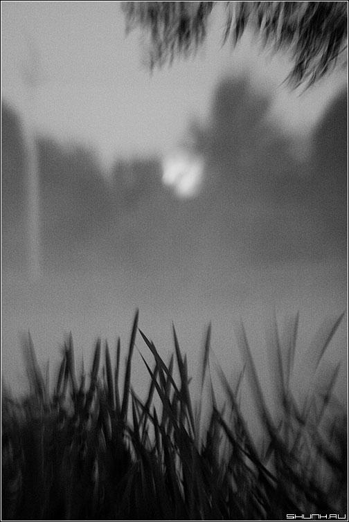 Лунный рассвет - луна камыш рогоз чернобелая небо фото фотосайт
