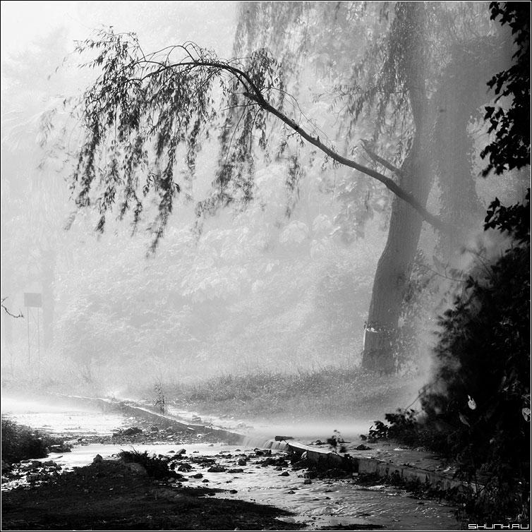 Непогода - чернобелая квадрат дерево дождь хоста сочи фото фотосайт