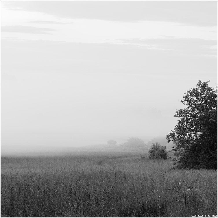 Туманный вечер - чернобелая квадрат деревня туман дерево поле трава фото фотосайт