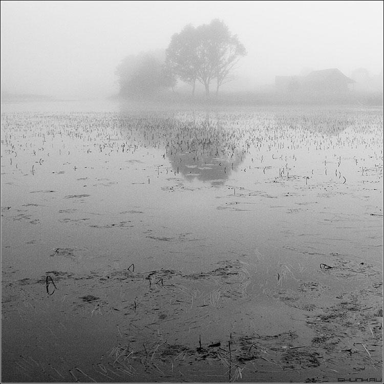 Т.У.М.А.Н. - чернобелая квадрат туман озеро деревня таложня домик фото фотосайт
