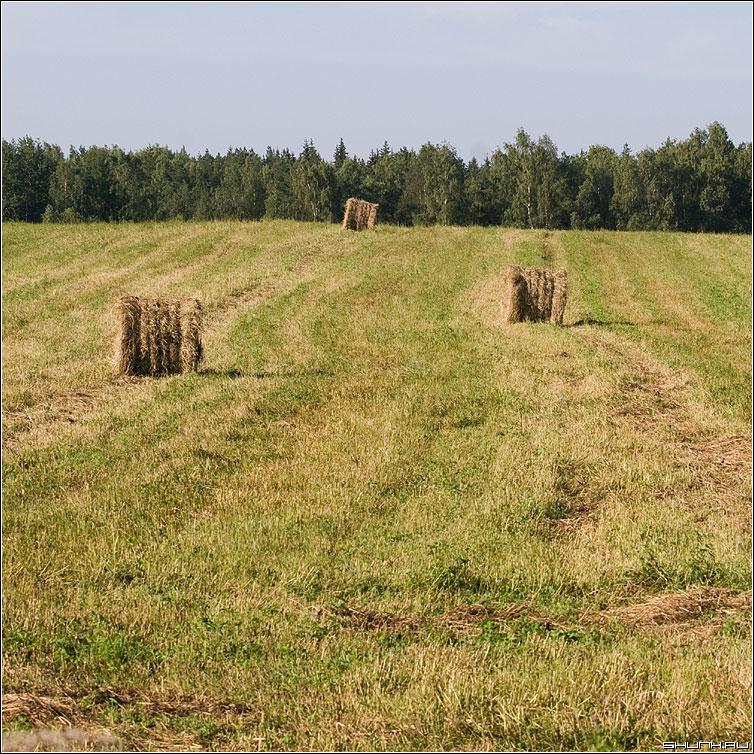 Катушки - лето сенокос поле сено небо лес фото фотосайт