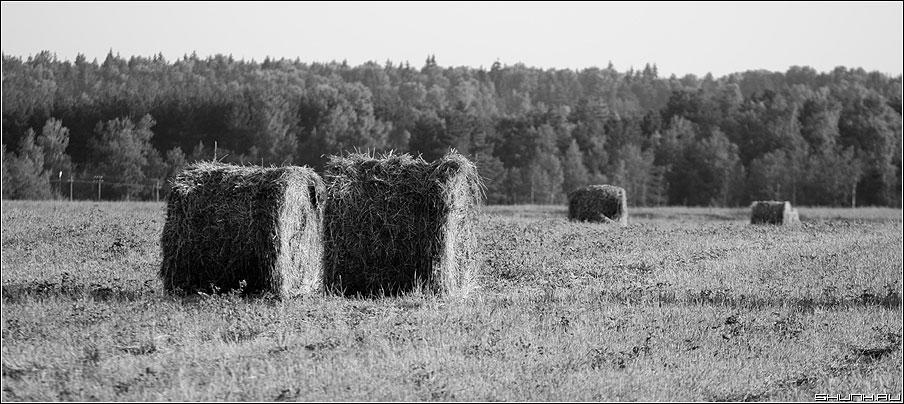 Катули - сено лето поле лес чернобелая фото фотосайт