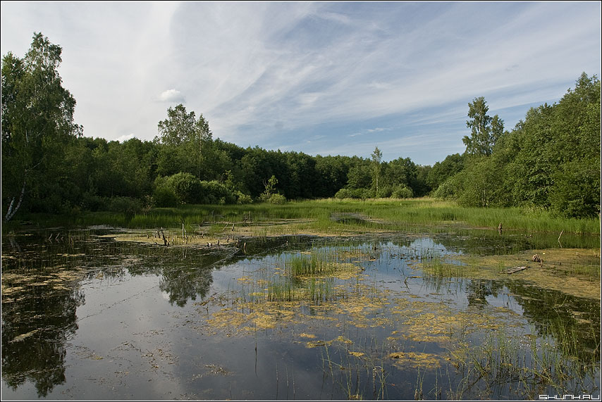Болотице - деревня лето лес болото тина фото фотосайт