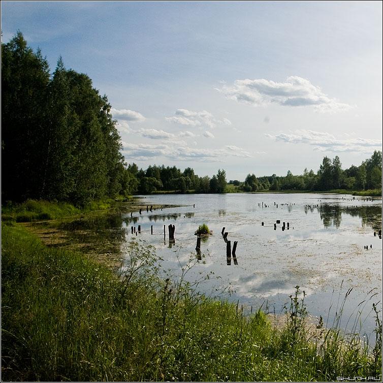 У бережка реки - заводь река тина лето небо озерцо фото фотосайт