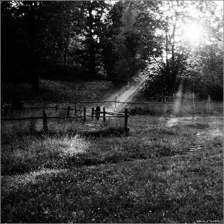 Сказочный свет - закат солнце квадрат чернобелая забор лес лучи фото фотосайт