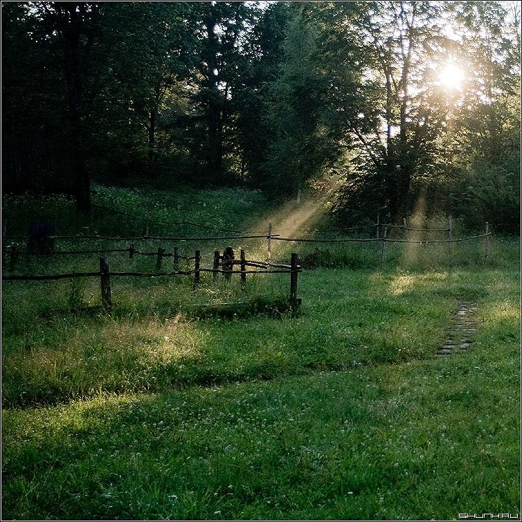Сказочный свет (цветное) - лес закат солнце забор лучи квадрат фото фотосайт